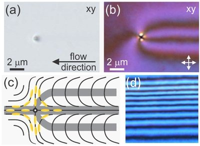 Fig. 3: Creation of π-walls by a disclination line of strength -1 moving along the flow of the nematic liquid crystal. The disclination line is parallel to the z-coordinate, i.e., it connects the bottom and the top wall of the shallow microchannel. The following images show the xy-plane. (a) Unpolarized micrograph: the dark point indicates the scattering of light by the disclination line (perpendicular the image plane) at the leading end of the forming π-wall structure. (b) Micrograph between crossed polarizers: the alternate dark and bright regions are caused by the continuous change of the director orientation. (c) Schematic representation of director field in the xy-plane. (d) After the passing of several disclinations, the microchannel is filled with several parallel π-wall sets.