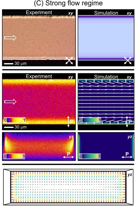 Fig. 6: Three basic flow regimes in the homeotropic microchannel - (A) weak flow, (B) medium flow, and (C) strong flow. For each regime, the first row (a) shows experimental and calculated POM (polarizing optical microscopy) micrographs in the xy plane; the second row (b) shows experimental and calculated FCPM (fluorescence confocal polarizing microscopy) micrographs in the xy and yz planes including the director configuration at the half-depth of the channel, 0 and 1 respectively indicate nematic director orthogonal and parallel to the excitation laser polarization; the third row (c) shows the full director profile calculated across the channel cross-section for the three regimes, blue color indicates out-of-plane director orientation, whereas red color corresponds to in-plane director orientation. Experiments were performed in a 16 μm deep channel.