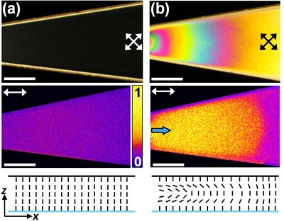 Fig. 8: (a) Polarizing optical microscopy (top row) and fluorescence confocal polarizing microscopy (middle row) micrographs of a channel filled with 5CB in absence of any flow. (b) At low flow rates, colorful birefringent domains appeared. The FCPM micrograph shows gradual decay of the signal along the downstream direction. The laser was polarized along the flow direction.