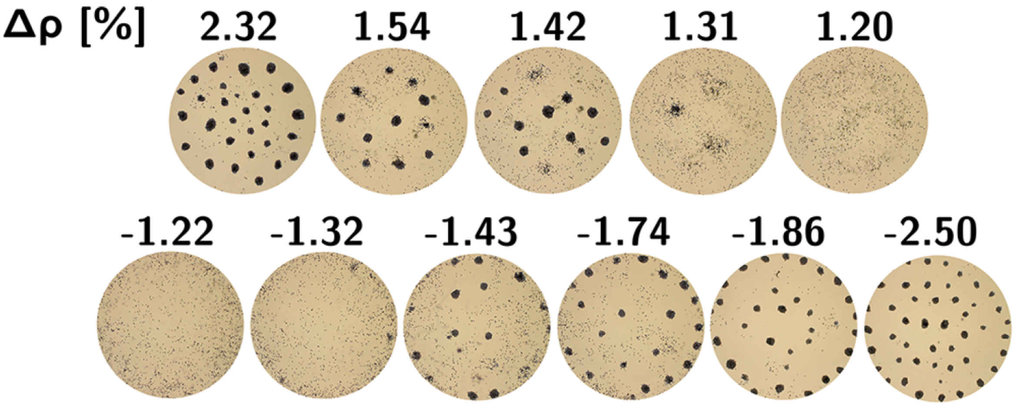 Fig. 3 Formation of swarms in an aqueous suspension of actively propelling oil droplets [26]. The density of the aqueous phase, and thereby the density difference Δρ between the aqueous phase and the oil, was varied by addition of D2O. Clearly, the swarm formation goes away when the density difference is too small (i.e., of order one percent or less) demonstrating the crucial role of buoyancy coupling for these patterns to form. The length scale of the swarm pattern indeed turns out to correspond to the size of convection rolls in the aqueous fluid, driven by the self-propulsion forces of the droplets.
