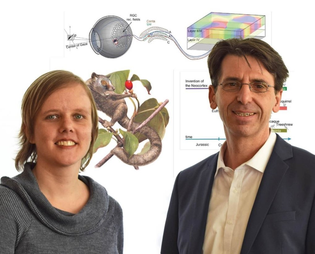 Marion Silies (ENI) and Fred Wolf (MPIDS) from the Bernstein Centre for Computational Neuroscience in Göttingen. Both are founding members of the new Göttingen Campus Institute Dynamics of Biological Networks.