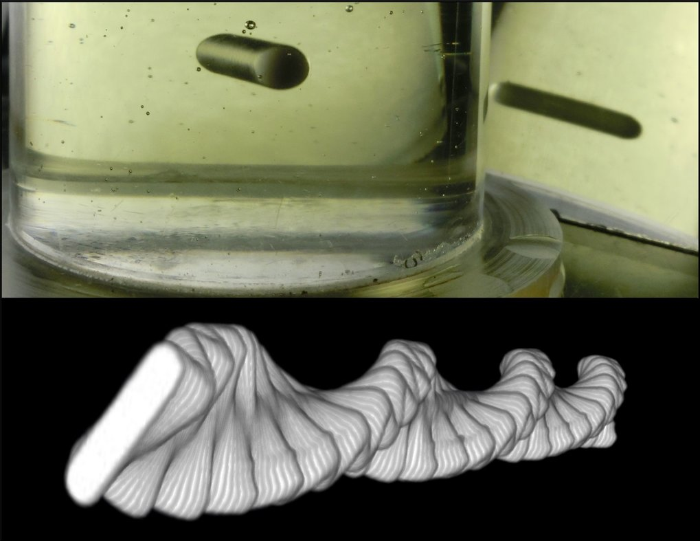 Top: Image of the levitating flea in Castor Oil. Bottom: A 3D spiral rendered by combining experimental images of the flea over a 1 s period as it levitates, demonstrating the dynamics of the levitating behaviour, which combines low frequency spinning and high frequency oscillation.