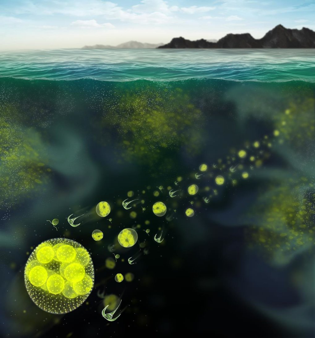 Artist's rendition of phytoplankton species forming a patchy distribution